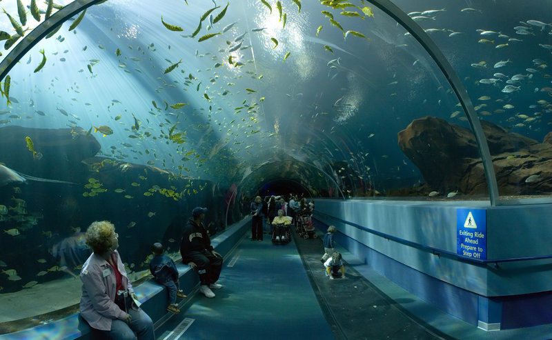 800px-Georgia_Aquarium_-_Ocean_Voyager_Tunnel_Jan_2006